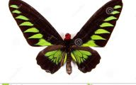 Green And Black Butterfly  36 Free Hd Wallpaper