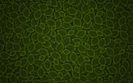 Green And Black Wallpapers  5 Wide Wallpaper