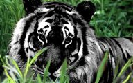 Rare Black Animals 21 Widescreen Wallpaper