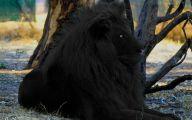 Rare Black Animals 28 Wide Wallpaper