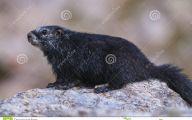 Rare Black Animals 3 Background Wallpaper