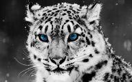 White And Black Wallpaper Designs 19 Desktop Background