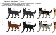 Black And Silver German Shepherd  47 Wide Wallpaper