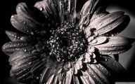 Black And White 1080P Wallpaper  19 Wide Wallpaper