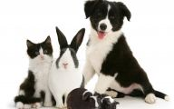 Black And White Images Of Animals  3 Background