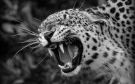 Black And White Images Of Animals  9 Desktop Wallpaper