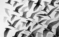 Black And White Images Of Birds  1 High Resolution Wallpaper