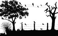 Black And White Images Of Birds  25 Wide Wallpaper