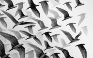 Black And White Images Of Birds  33 Background