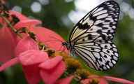 Black And White Images Of Butterflies  12 Cool Hd Wallpaper