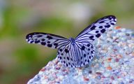 Black And White Images Of Butterflies  15 Free Wallpaper
