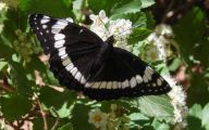 Black And White Images Of Butterflies  16 Free Hd Wallpaper