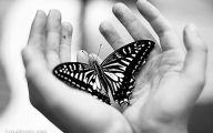 Black And White Images Of Butterflies  17 Background