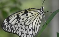 Black And White Images Of Butterflies  18 Cool Wallpaper