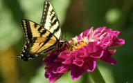 Black And White Images Of Butterflies  2 Wide Wallpaper