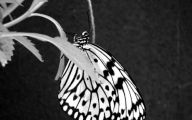 Black And White Images Of Butterflies  21 Cool Hd Wallpaper