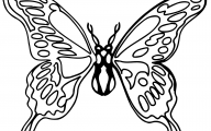 Black And White Images Of Butterflies  3 Background Wallpaper