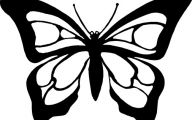 Black And White Images Of Butterflies  31 High Resolution Wallpaper