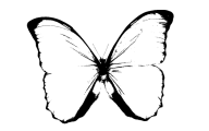Black And White Images Of Butterflies  33 Wide Wallpaper