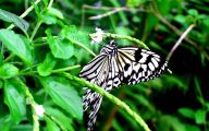 Black And White Images Of Butterflies  7 Wide Wallpaper