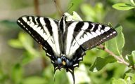 Black And White Images Of Butterflies  9 Cool Wallpaper