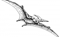 Black And White Images Of Dinosaurs  14 Background