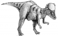 Black And White Images Of Dinosaurs  15 Wide Wallpaper