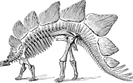 Black And White Images Of Dinosaurs  16 Hd Wallpaper