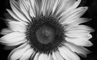 Black And White Images Of Flowers  11 Desktop Wallpaper