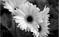 Black And White Images Of Flowers  12 Free Wallpaper