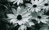 Black And White Images Of Flowers  19 Desktop Background