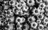 Black And White Images Of Flowers  5 Cool Hd Wallpaper