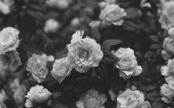 Black And White Images Of Flowers  8 Background