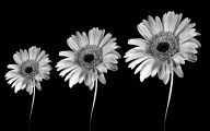 Black And White Images Of Flowers  9 Background