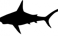 Black And White Images Of Sharks  30 Free Hd Wallpaper