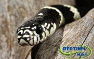 Black And White Images Of Snakes  32 Desktop Wallpaper