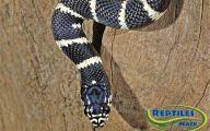 Black And White Images Of Snakes  33 Desktop Wallpaper