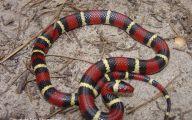 Black And White Images Of Snakes  41 Desktop Wallpaper