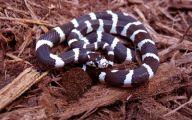 Black And White Images Of Snakes  7 Desktop Wallpaper