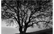 Black And White Images Of Trees  1 Desktop Wallpaper