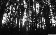 Black And White Images Of Trees  13 Desktop Wallpaper