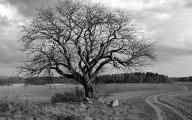 Black And White Images Of Trees  16 Desktop Wallpaper
