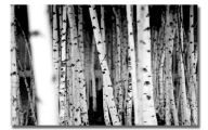 Black And White Images Of Trees  19 Background