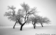 Black And White Images Of Trees  22 High Resolution Wallpaper