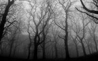 Black And White Images Of Trees  23 Desktop Wallpaper