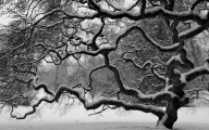 Black And White Images Of Trees  29 High Resolution Wallpaper