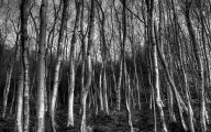 Black And White Images Of Trees  34 Cool Wallpaper
