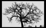 Black And White Images Of Trees  38 Desktop Wallpaper