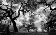 Black And White Images Of Trees  4 Cool Wallpaper