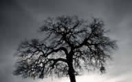 Black And White Images Of Trees  40 Cool Wallpaper